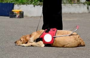 Getting A Service Dog