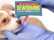 How to Deworm a Dog Effectively