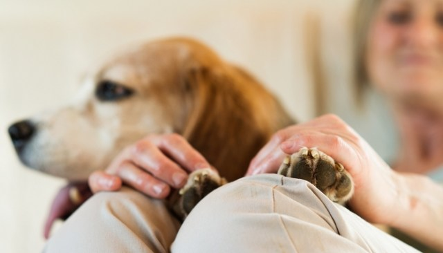 How to Make My Dog an Emotional Support Dog