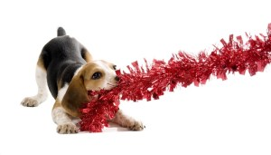 Most Dangerous Christmas Decorations for Dogs