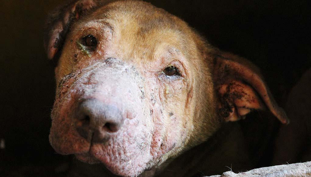 Most Serious Common Dog Skin Conditions
