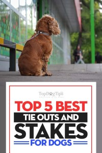 The Best Dog Tie Out and Stake Choices