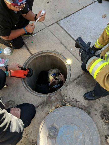 Dog Miraculously Survives Being Impaled by Pipe Underground