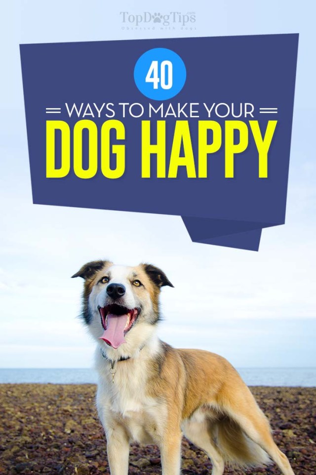 40 Best Tips on How to Make Dogs Happy