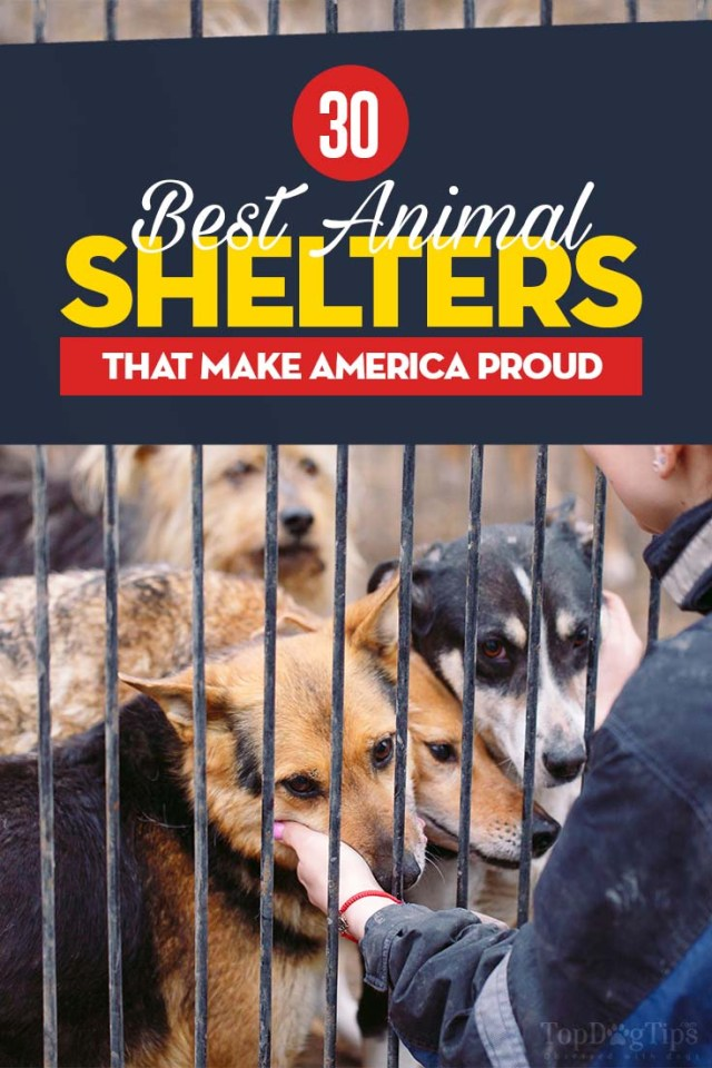 Best Animal Shelters 2020