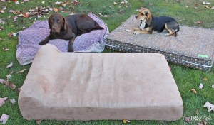 Testing Different Dog Beds