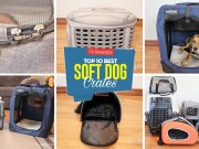 Best Soft Sided Dog Crates - Top 10 Rankings