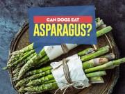 Can my dog eat asparagus