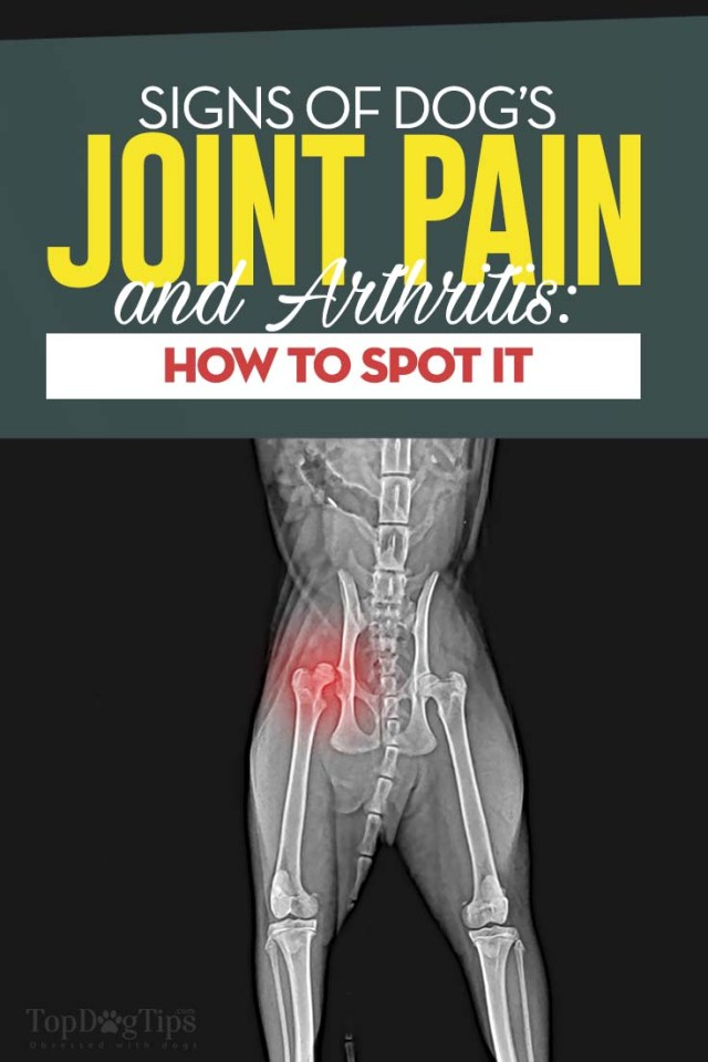 Common Signs of Joint Pain in Your Dog