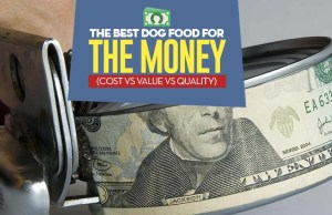 Find Best Dog Food for the Money