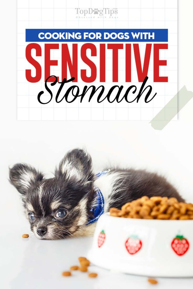Guide on How to Feed Dogs with Sensitive Stomachs