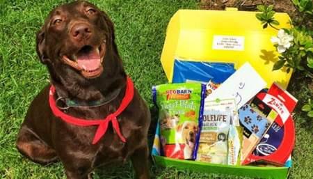 Pet Treated Dog Subscription Box
