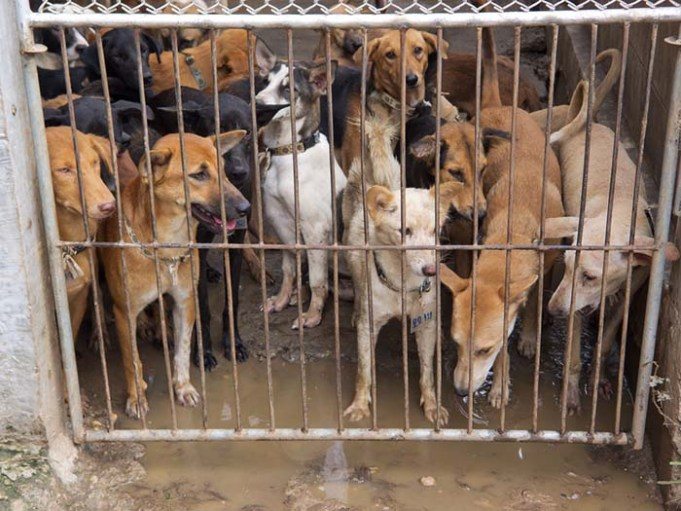 South Korea May Ban Eating of Dog Meat this Month