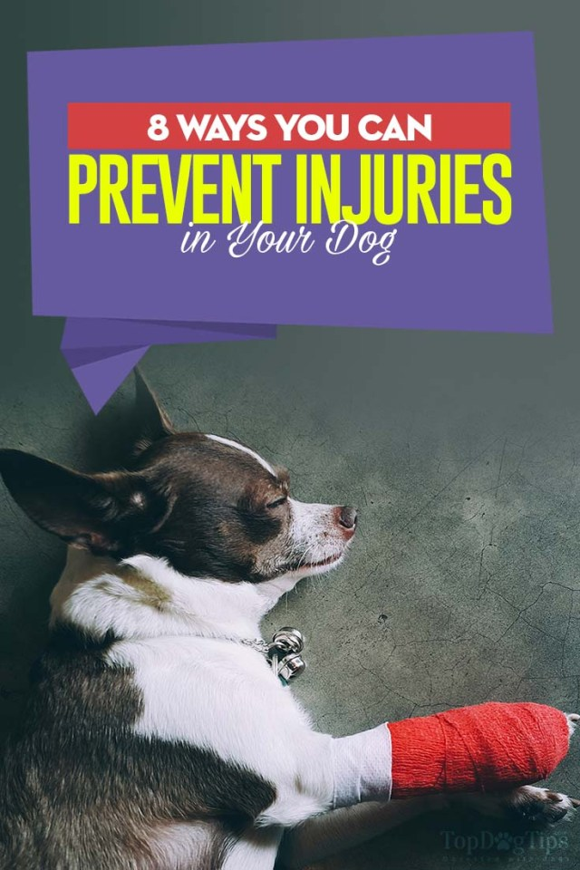 The 8 Ways You Can Prevent Injuries in Your Dog