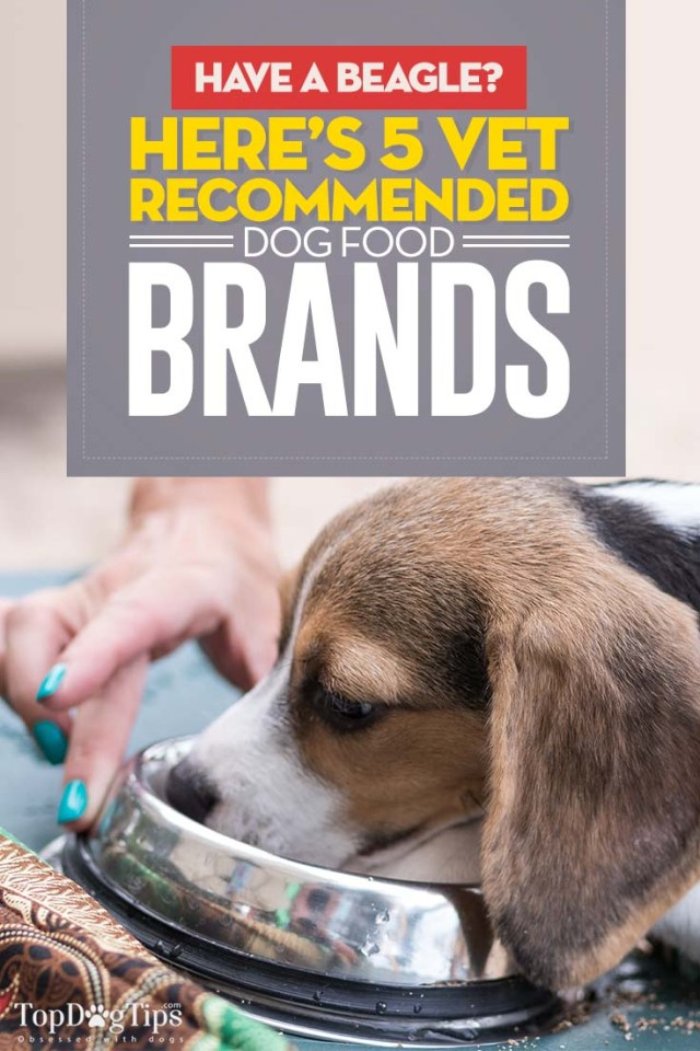 The Best Dog Food for Beagles - Top 5 Vet Recommended Brands