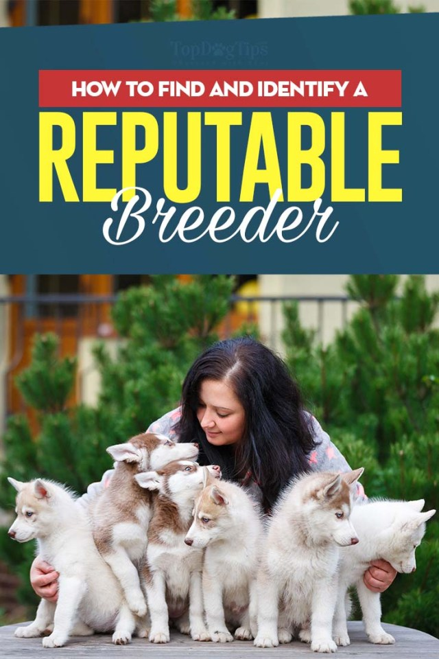 Tips on How to Find Reputable Dog Breeders