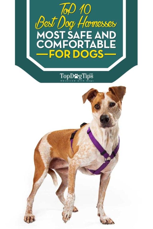 Top 10 Best Dog Harness Brands