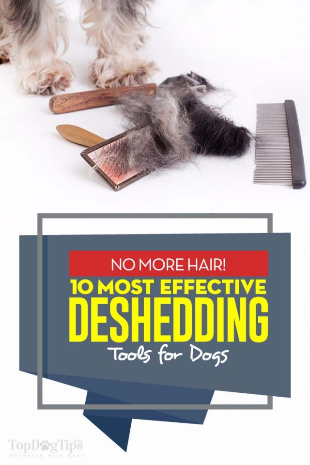 Top 10 Rated Best Deshedding Tools for Dogs