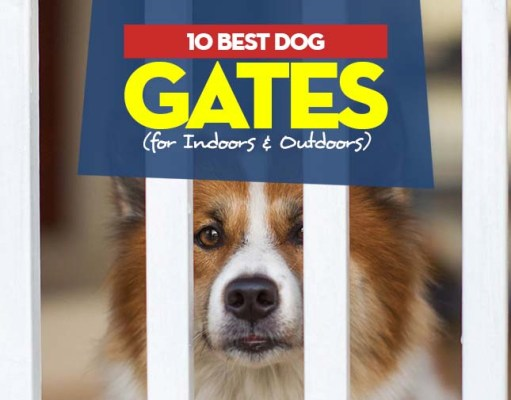 Top Best Dog Gates for Indoors and Outdoors