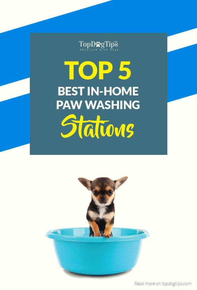 Top Rated Paw Washes for Dogs