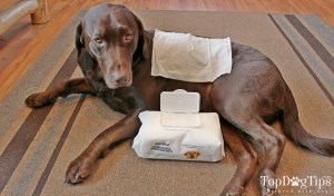 Well & Good Hypoallergenic Deodorizing Wipes Review