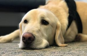 Naval Base Using Dogs to Prevent Suicides