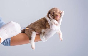 Dog Parvo - 10 Most Effective Ways to Prevent It (Based on Science)