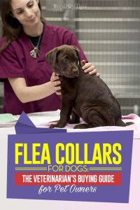 Flea Collar for Dogs Guide