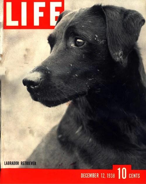 Life magazine 1938 Black Labrador cover