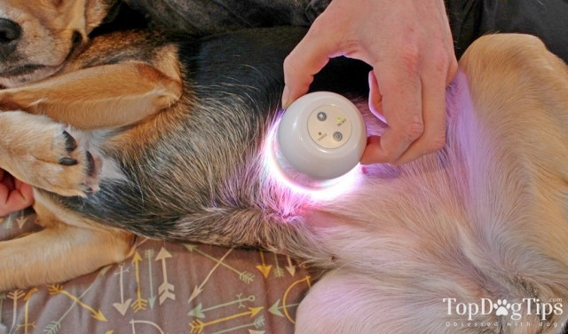 LumaSoothe Light Therapy for Pets