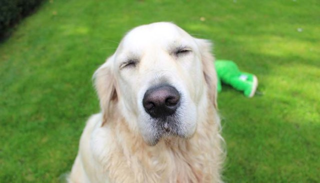 My Dog Won't Open His Eyes. What Should I Do?