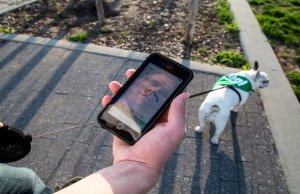 """Walking App """"Wag"""" Gets $300 Million Investment from Unlikely Source"""