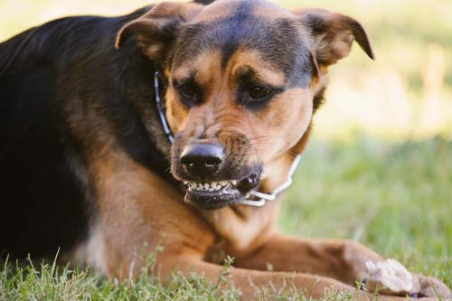 15 Facts About Dog Fear Aggression