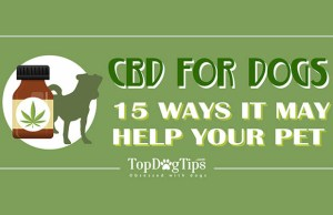 CBD and Dogs Infographic