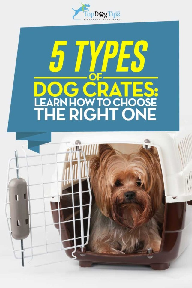 Dog Crate Types