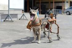 Dog Wheelchair DIY