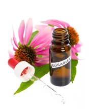 Echinacea for kennel cough in dogs