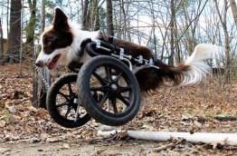 Front leg dog wheelchair