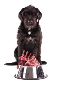 How to Feed Dogs With Kidney Disease