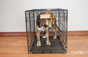 Midwest iCrate Folding Metal Dog Crate Review