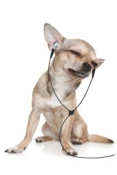 Playing classical music for hyperactive dogs