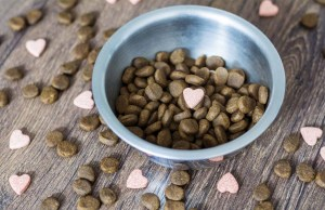 Prebiotics for Dogs - 6 Things You Must Know