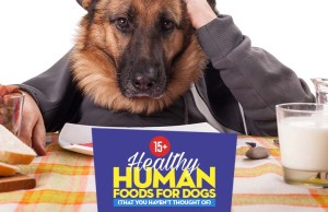 Top Best Human Foods for Dogs