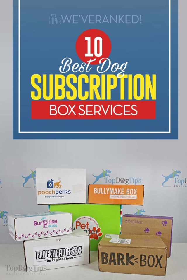 15 Best Dog Subscription Boxes 2020