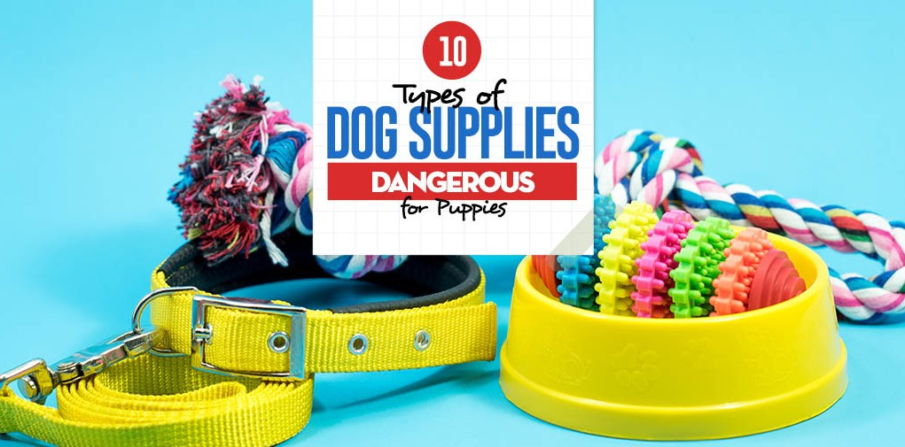 10 Types of Dog Supplies Potentially Dangerous for Puppies