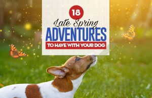 18 Late Spring Adventures to Have With Your Dog