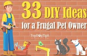 33 DIY Ideas for a Frugal Pet Owner