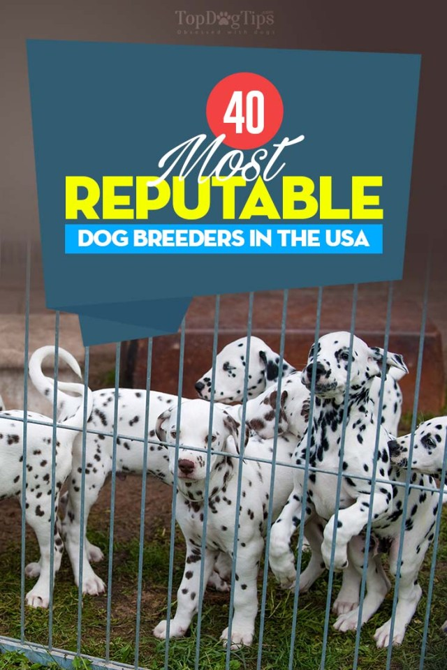 40 of the Most Reputable Dog Breeds in USA (2020)
