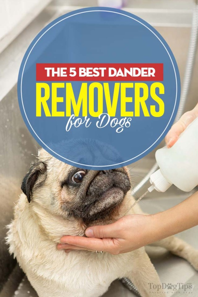 5 Top Rated Dog Dander Treatments