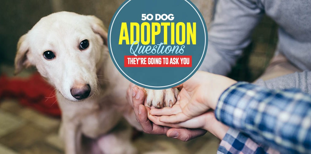 50 Dog Adoption Questions They're Going to Ask You